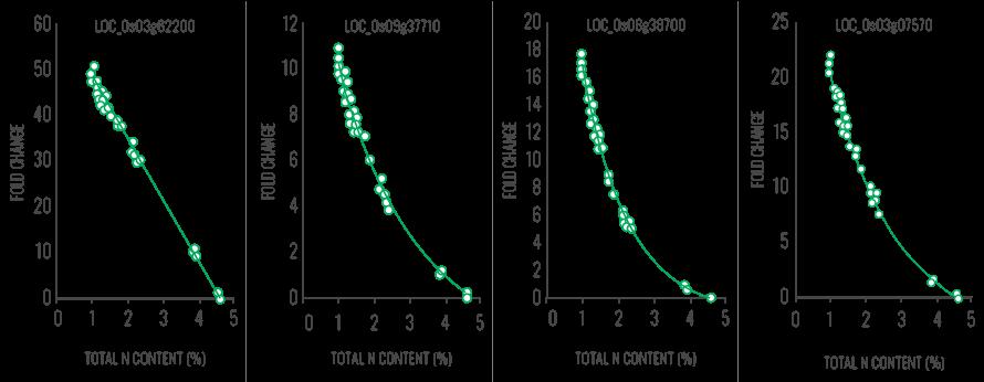 Figura 2: Relazione tra contenuti in N di germogli di riso e livelli di espressione di geni specifici